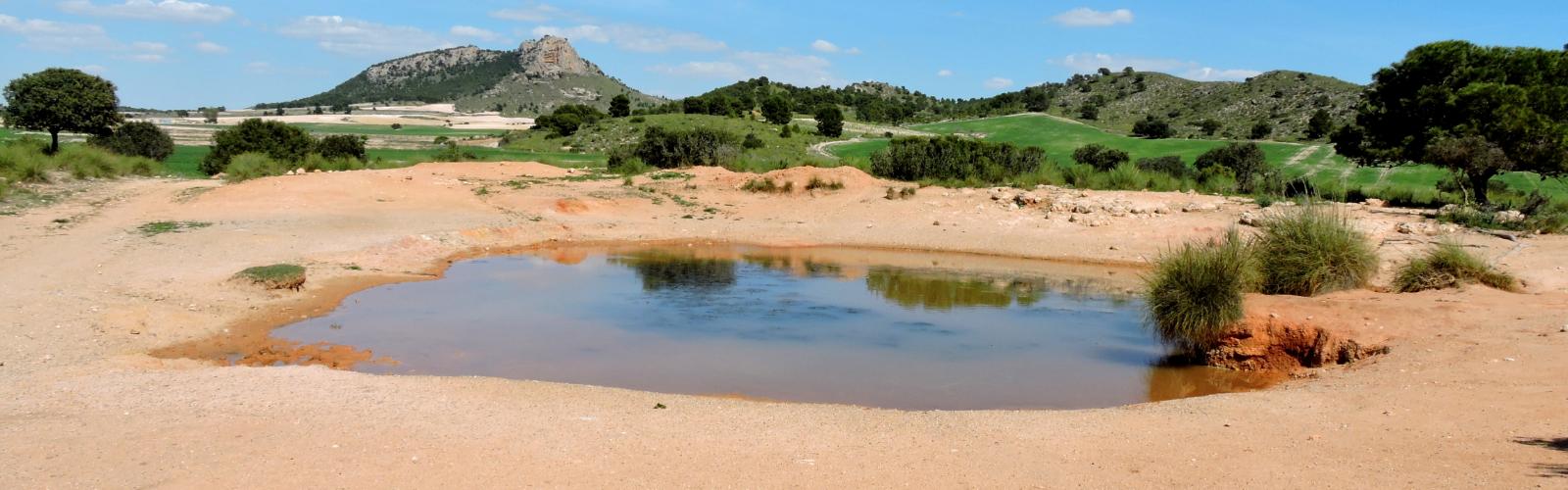 Las 40 charcas y abrevaderos estudiados en la comunidad murciana acogen el 90% de las especies de anfibios que habitan esta Región. Imagen: UMU