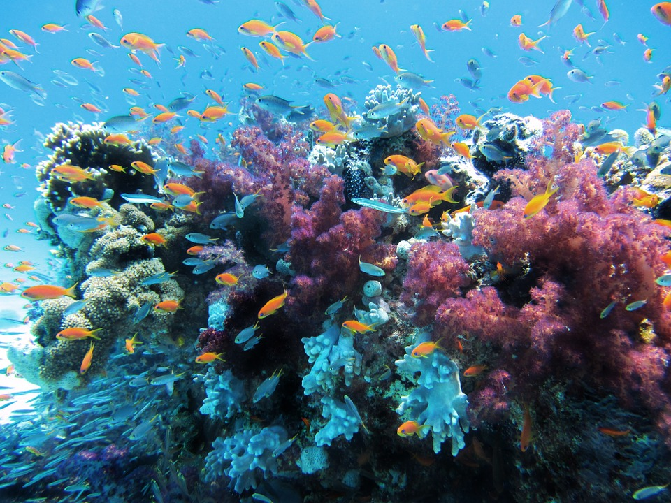 Muchas presiones derivadas de la actividad humana continúan degradando los océanos, en particular hábitats importantes como los arrecifes de coralImagen: Pixabay