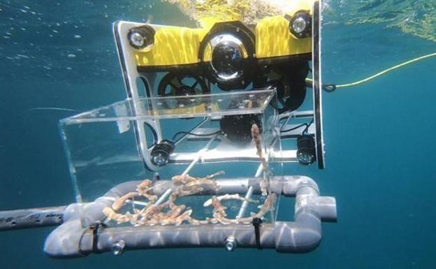 Imagen: UPCT / Fundación Oceanographic