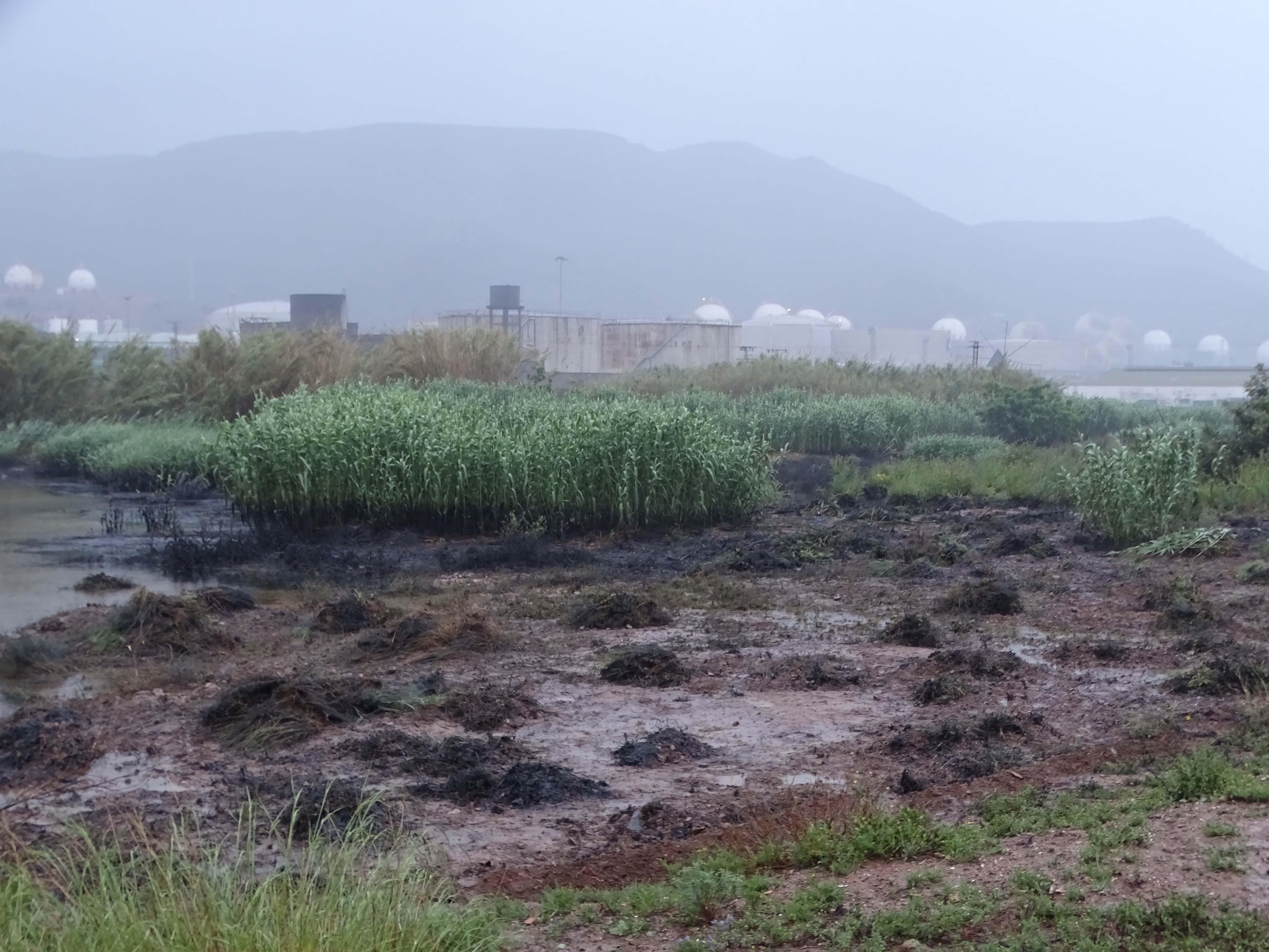 Más manchas de vertidos en los terrenos. Imagen: ANSE