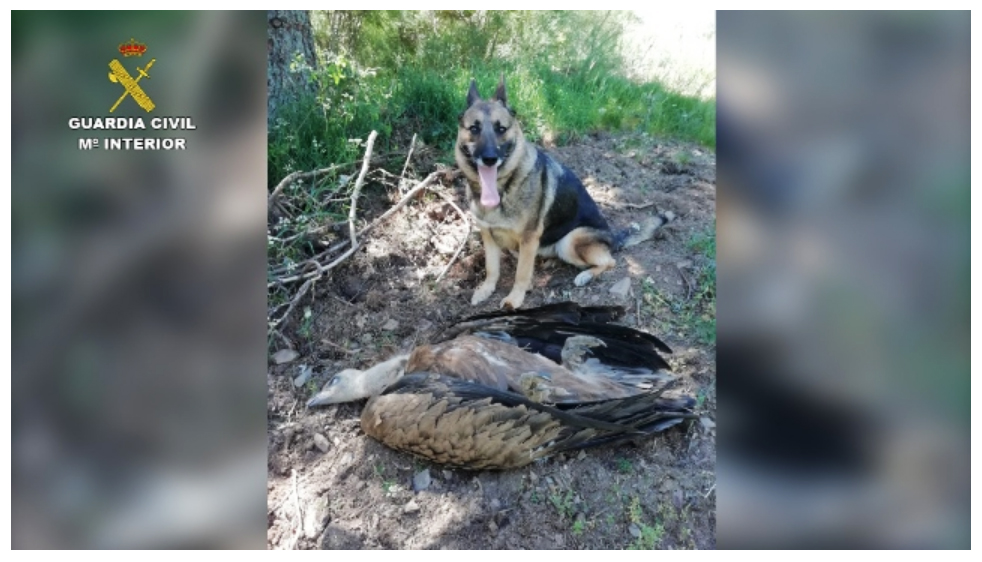 Las unidades caninas de la Guardia Civil son un elemento clave en la lucha contra el uso de cebos envenenados. Imagen: Seprona
