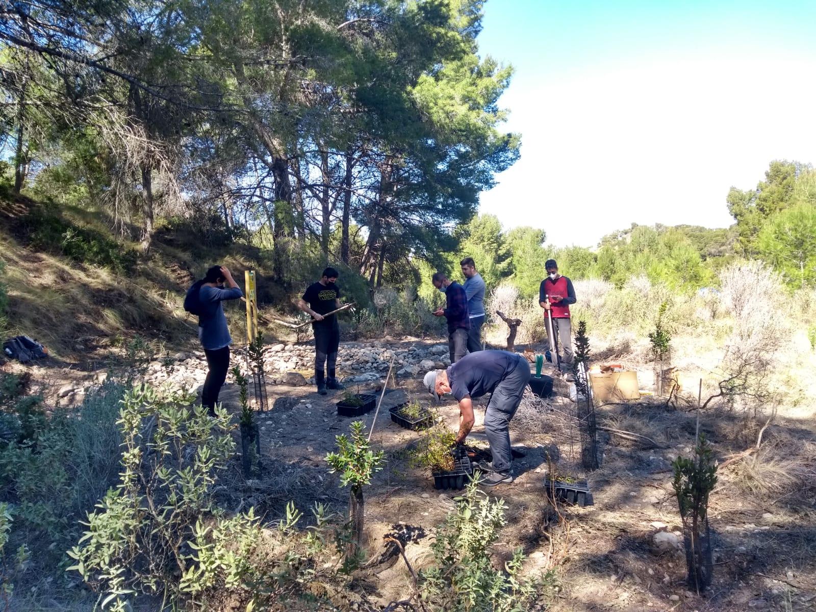 En las actividades también se han plantado 200 arbustos. Imagen: Caramucel
