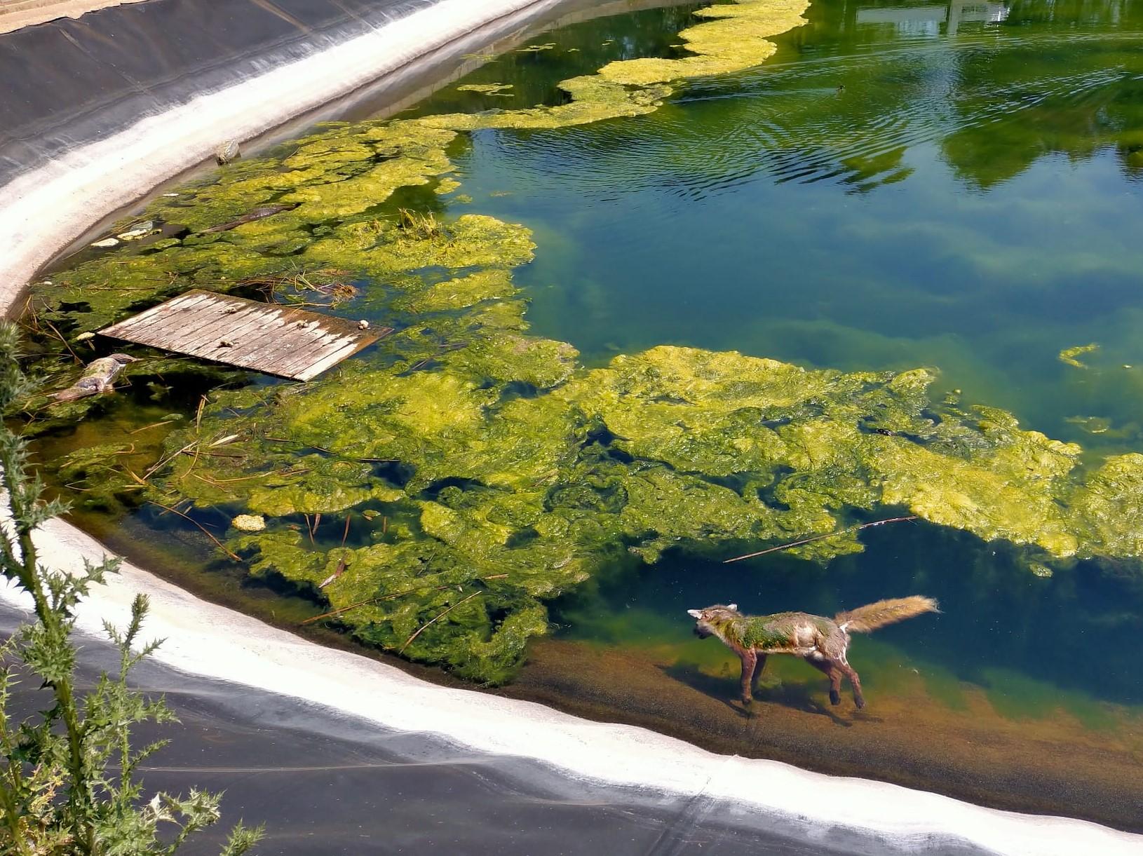 Zorros ahogados en el Centro de Educación Ambiental de la Comunidad Valenciana. Imagen: Adensva